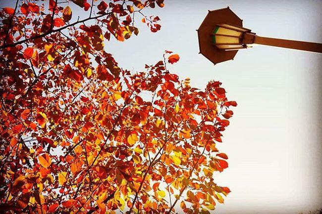 🍁🍂🍃🍄🌰 . Autumnlove Autumn Fall Osakawalk Japan Fallingleaves Red Yellow 紅葉 大阪城公園 Travelgram
