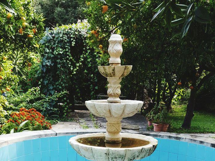 Garden@lebanon first eyeem photo