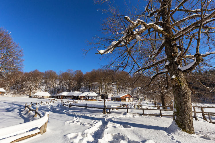Bare trees on snow covered landscape against blue sky