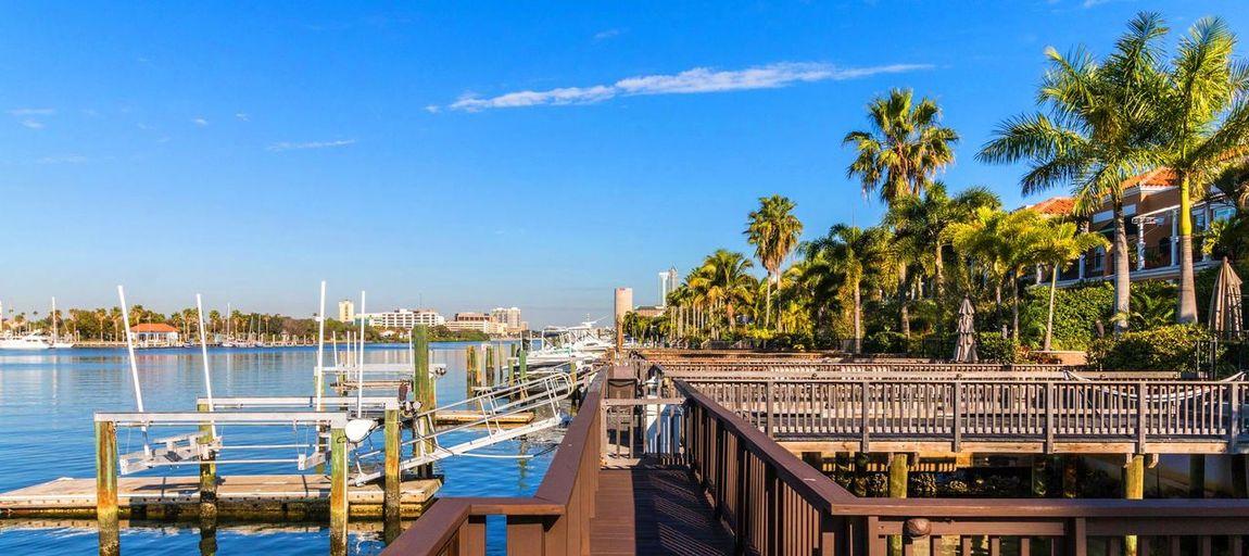 Cityscape Day No People Outdoors Palm Tree Sky TampaBayFlorida Travel Destinations