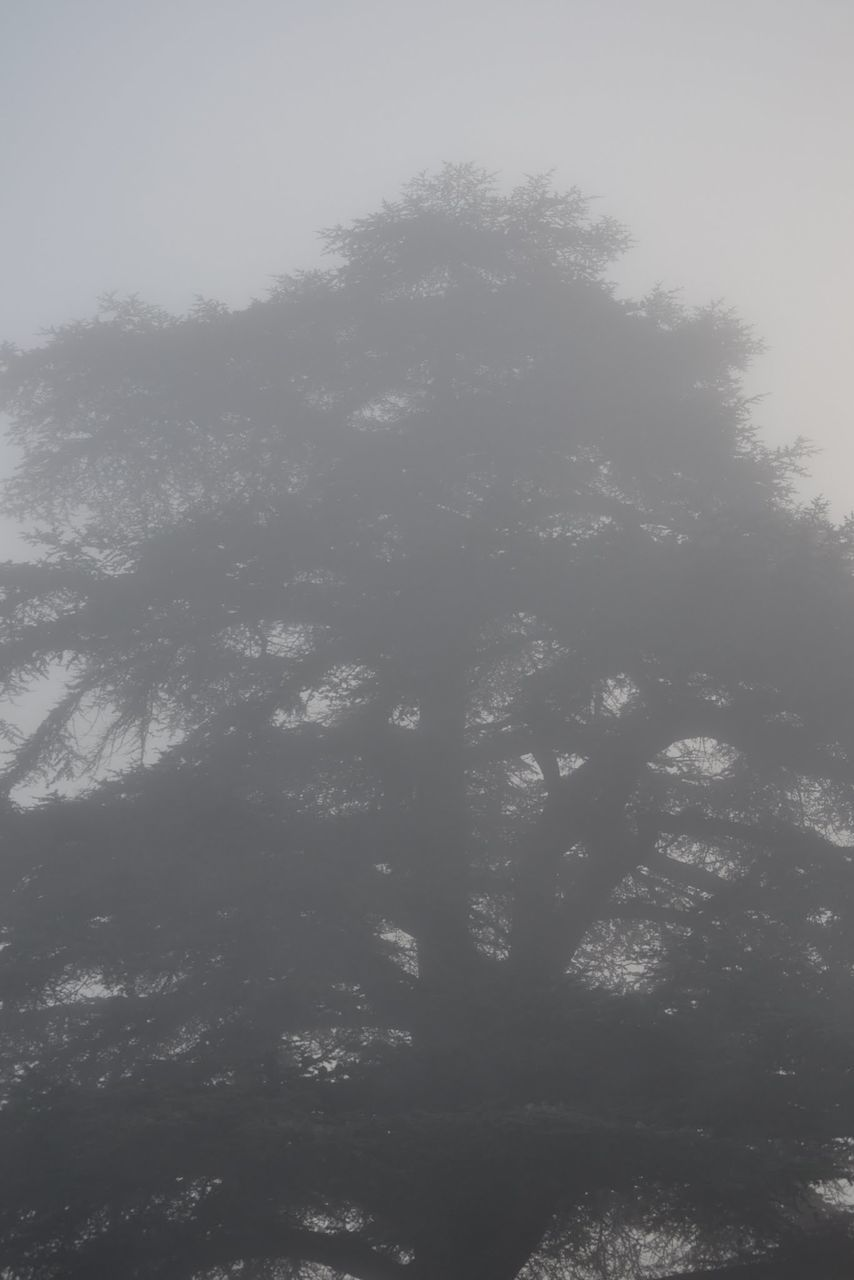 tree, no people, nature, day, tranquility, fog, outdoors, beauty in nature, sky