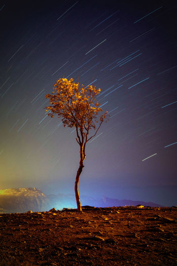 Night shot Star - Space Night Astronomy Space And Astronomy Tree Nature Tranquility Sky No People Constellation Space Outdoors Nikon D7100 Byme Single Tree Taif Taif😍 Ksa😍 KSA Stars Startrail  Nightphotography Long Exposure Beauty In Nature Milky Way