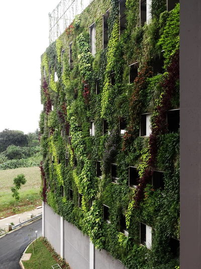 Verticalgarden Architecture Green Color Plants Fasade Architectureporn GreenBuilding Greenarchitechture