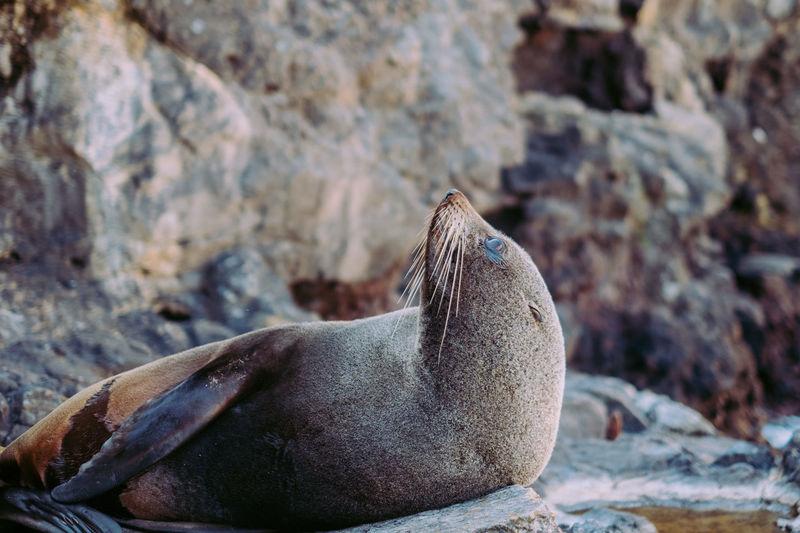 High angle view of sea lion on rock