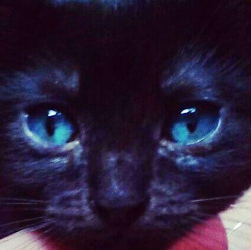 First Eyeem Photo Kitten Black Cat Blue Eyed Baby Cat♡ Catsofinstagram Lovely