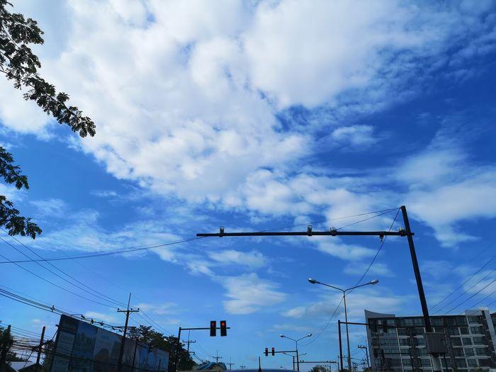 Telephone Line Bird Tree Sky Cloud - Sky Animal Themes