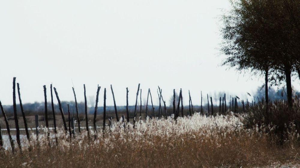 Nature Tranquility Outdoors No People Growth Tree Water Reed North EyeEmNewHere