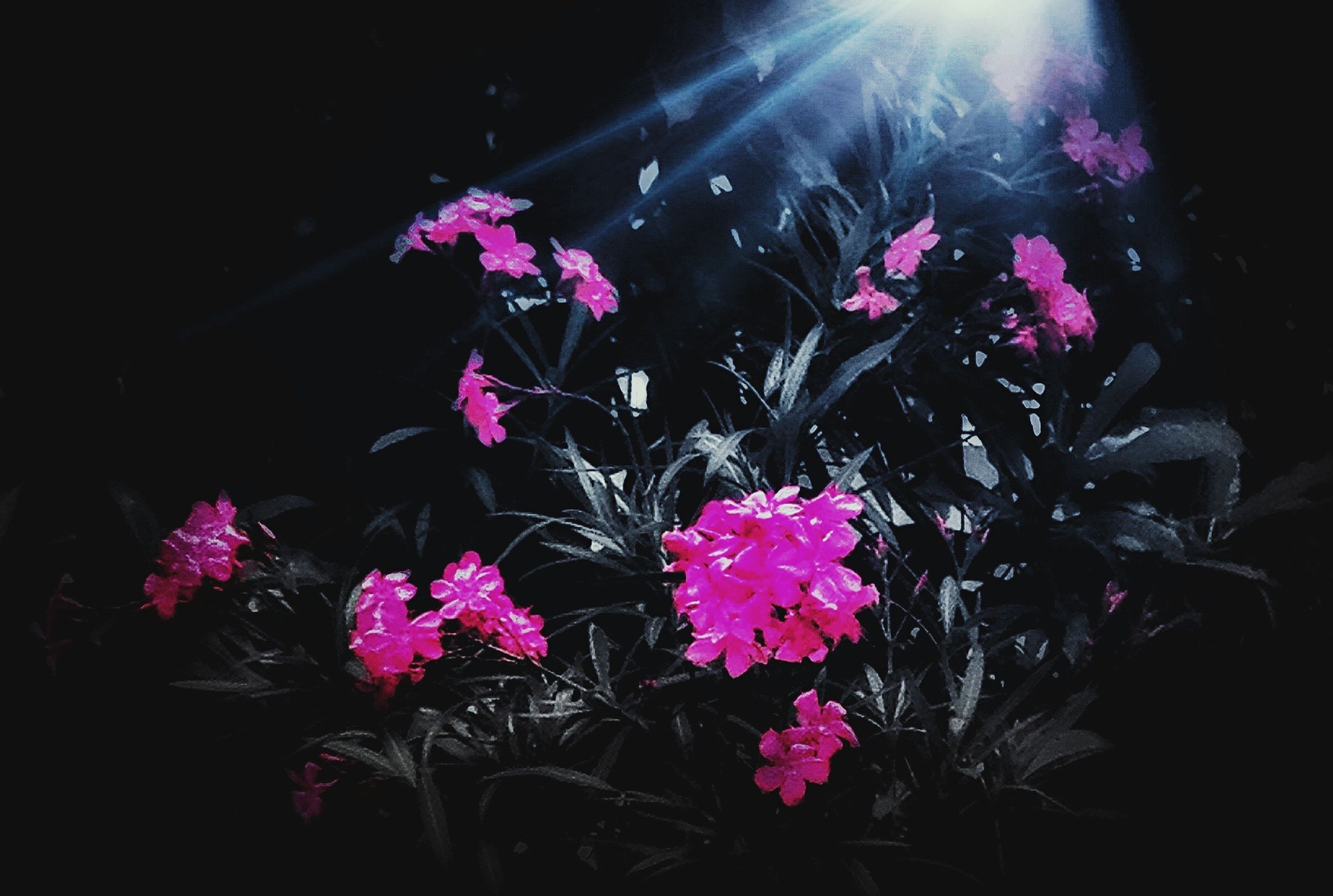 flower, no people, fragility, nature, night, beauty in nature, outdoors, freshness, undersea