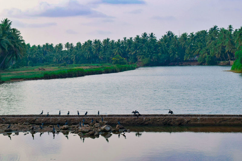 Village Bird Nature Water Tree Outdoors Beauty In Nature Sky Flamingo Udupi River The Great Outdoors - 2017 EyeEm Awards