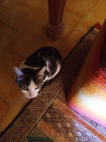 Hassi labiad, Morocco Pets Indoors  Cat Winking Cat