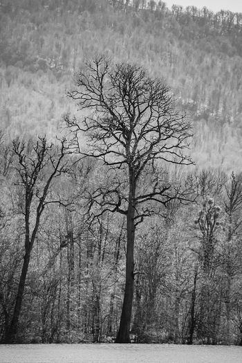 Tree_collection  Travel Photography Black And White Photography Shadows & Lights Iran♥ Lake View Springtime Hello World ✌ Hot Look Today Nature Photography
