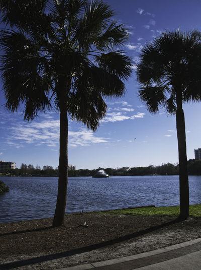 Downtown Lake