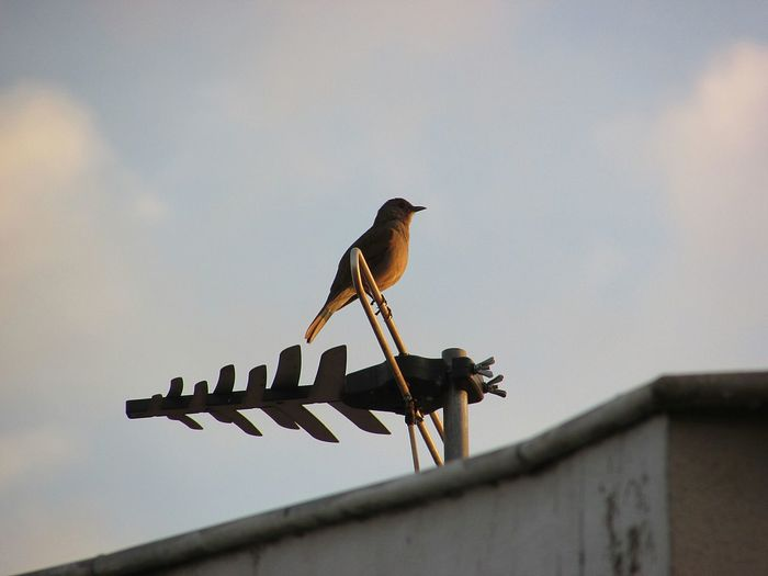 Low angle view of birds perching on roof against sky