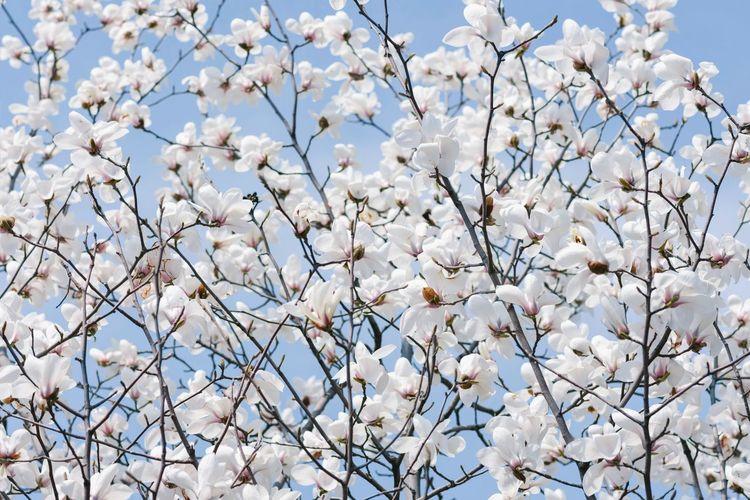 繁花 Flower Tree