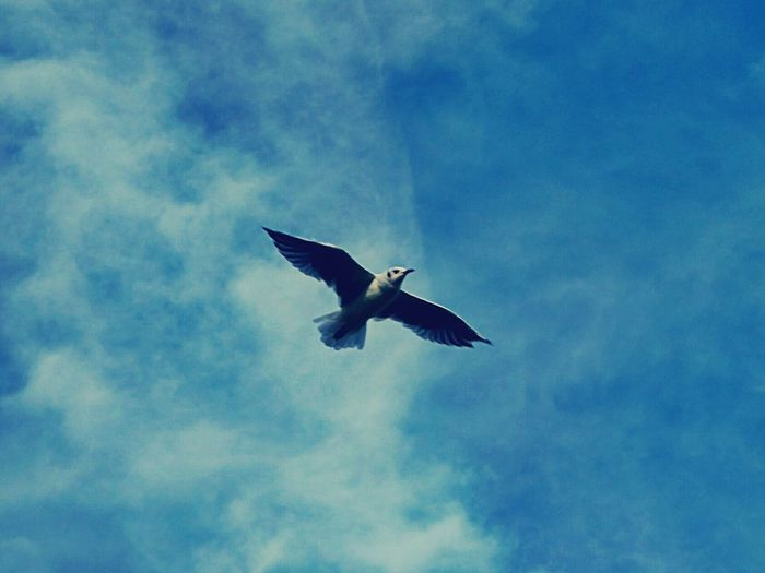 Sea And Sky Birds🐦⛅ Sky And Clouds No People Animal Themes Outdoors Summer ☀ Springtime Freshness Seagull Streetphotography United Kingdom Beautiful Photography Beauty In Nature Spring Is In The Air Flight Flying Flying High Dreamlike Dreams