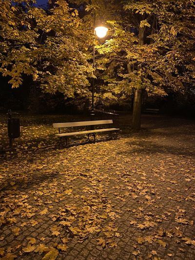 Park bench by autumn trees at night