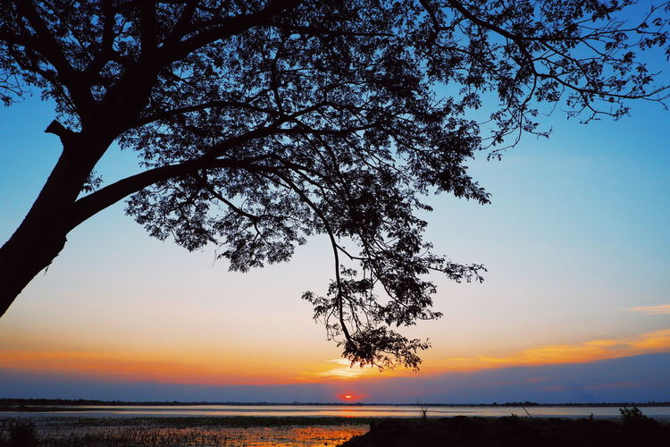Sky Tree Beauty In Nature Plant Scenics - Nature Sunset Tranquility Tranquil Scene Water Nature Sea Silhouette Land No People Branch Growth Outdoors Idyllic Horizon Horizon Over Water
