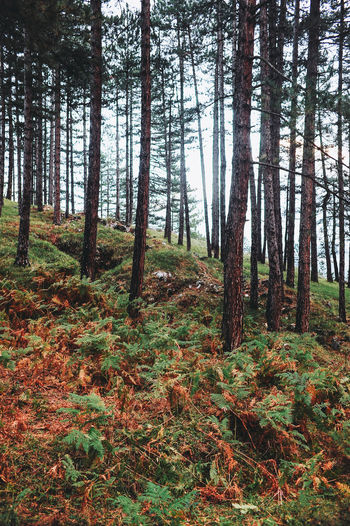 Bosnia And Herzegovina Autumn Beauty In Nature Day Forest Growth Landscape Nature No People Outdoors Pine Tree Sarajevo Scenics Tranquil Scene Tranquility Tree Tree Trunk Wilderness Area WoodLand