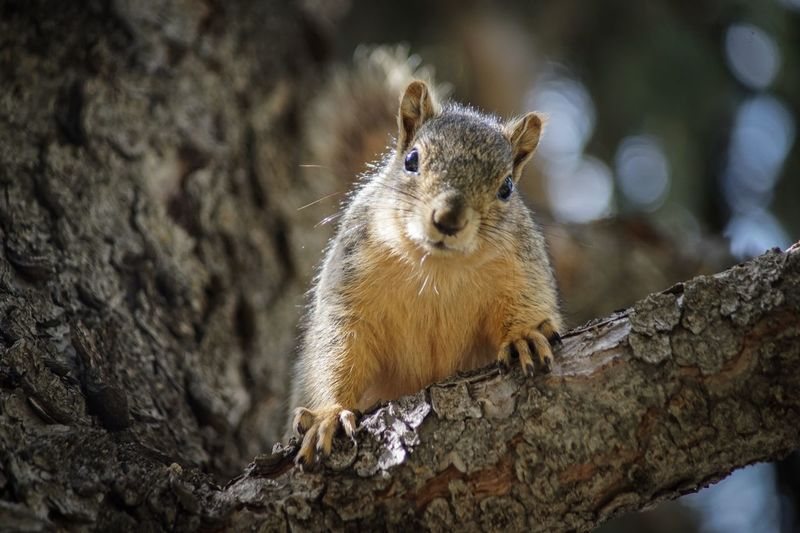 EyeEm Selects Animal Wildlife Animal Animal Themes Animals In The Wild One Animal Rodent Close-up Nature Tree Vertebrate Focus On Foreground Squirrel Outdoors Mammal No People Day Tree Trunk Branch Trunk Textured