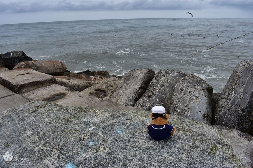 Nelson in Thorsminde. 🐻 Teddy Teddy Bear NelsonsAdventures Stuffed Toy Northsea Thorsminde Denmark Sea Mole Horizon Over Water Sitting Watching The Sea Water Wave Waves, Ocean, Nature Waves Ocean Ocean View Coast Seascape Landscape Denmark 🇩🇰 Landscape_Collection EyeEm Masterclass EyeEm Nature Lover