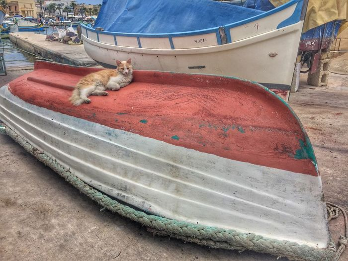 Cat resting on boat at Harbour in Marsaxlokk, Malta Animal Themes Day Domestic Animals Domestic Cat Feline Lying Down Mammal No People One Animal Outdoors Pets Relaxation Sitting Sleeping