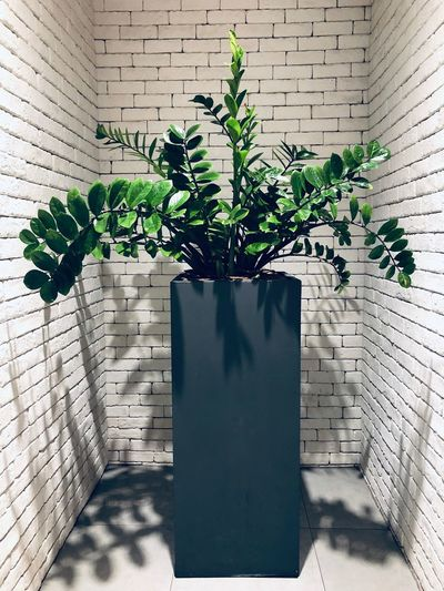 Plant Growth Nature Leaf Plant Part No People Potted Plant