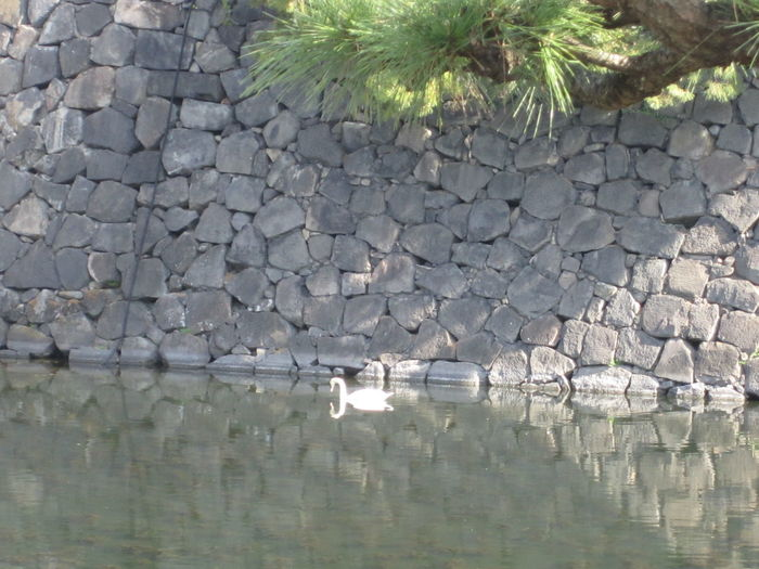 Beauty In Nature Day Floating On Water Nature No People Outdoors Rock Wall Swan Tokyo, Japan Tranquil Scene Tranquility Wall Water