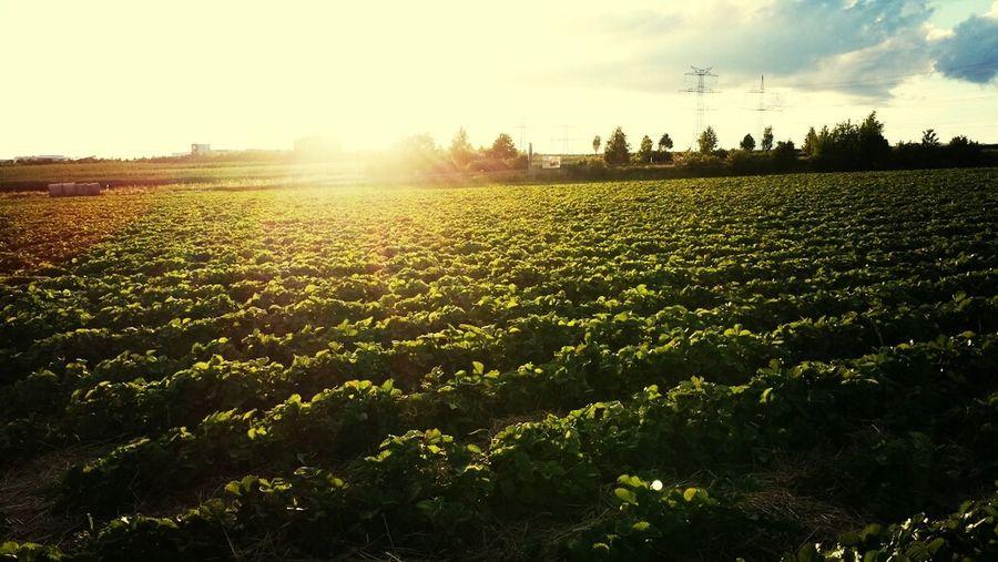 Grafschaft Sonne Landschaft