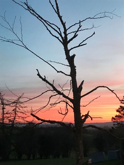 Sunset Tree Silhouette Nature Branch No People Outdoors Landscape Scenics Sky