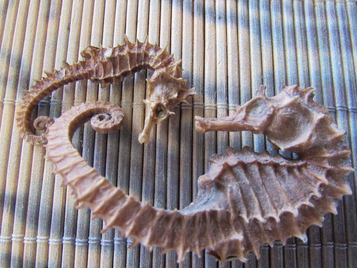 Animal Bone Animal Themes Close-up Large And Small Mamuals Lines And Shapes Rows Of Bamboo Seahorses Spikes Textures And Surfaces Premium Collection