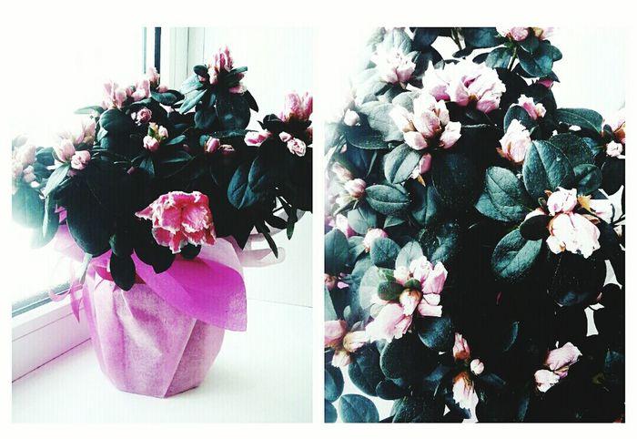 Flower Nature No People Nice Nice Photo Pinkflower Pink Pink Color цветы цветок  розовый розовый цветок прекрасно