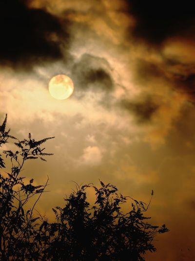 Low angle view of silhouette plants against moon at sunset