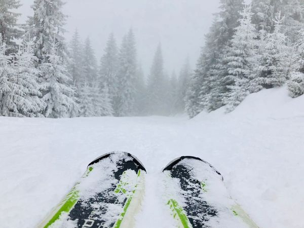 Close up of skis with snowy evergreen forest ahead Fog Cold Snow Nobody Active Evergreen Conifers Trees Forest Close Up Sports Active Slope Skis Skiing Snow Winter Cold Temperature Weather Nature White Color Outdoors Beauty In Nature Day No People Tranquility Tree Sky