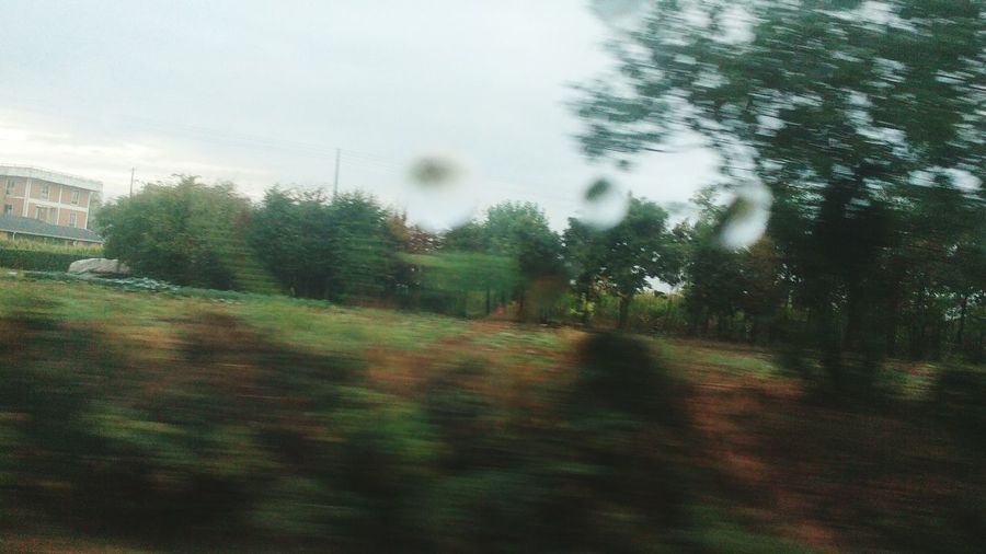 Tree Motion Blurred Motion Window Built Structure Dirt Road Building Exterior Sky Tranquility Growth Outdoors Nature The Way Forward Day Tranquil Scene Rain Raining Day