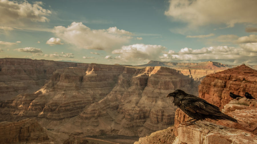 View of crow on rock against cloudy sky