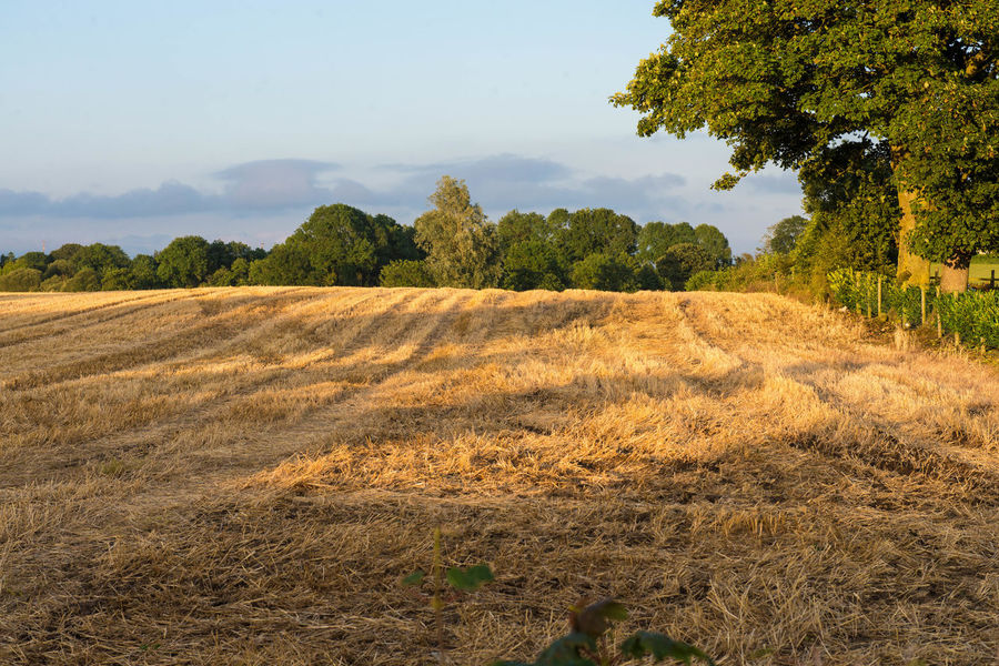 Ireland Agriculture Beauty In Nature Day Field Grass Growth Harvest Landscape Nature No People Outdoors Rural Scene Scenics Sky Tranquil Scene Tranquility Tree