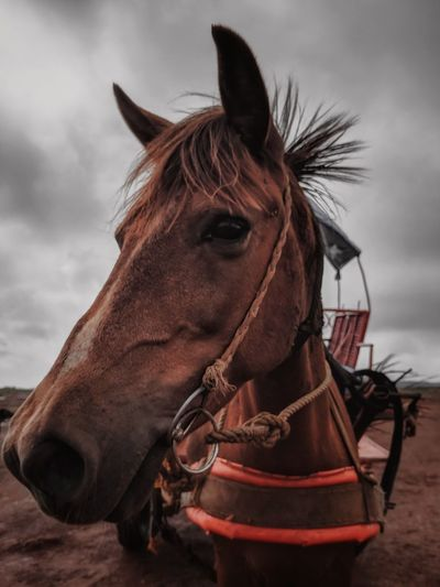 Horse majestic Power Raw Wallpaper Wildlife & Nature Landscape Mountain Environment Horse Love Animal Wild Nature Teampixel Animal Portrait Brown Beast Speed Strength Wildlife Photography Moody Sky Mood Mane Overcast Working Animal Atmospheric Mood Horsedrawn Horse Cart Storm Cloud Weather Horse Racing My Best Photo