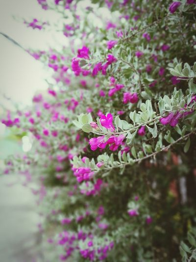 Flower Beauty In Nature Selective Focus Purple In The Green Streetphotography Springtime