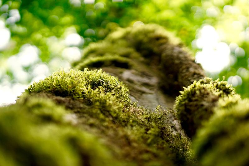 Close-up of moss growing on rock