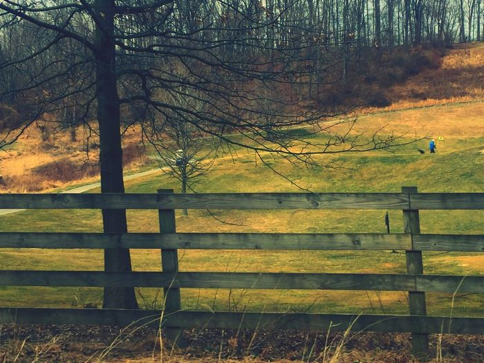 Tree Fence Nature Bare Tree Tranquility Tranquil Scene Non-urban Scene Protection Grass Beauty In Nature Idyllic Outdoors Scenics No People Field Landscape Day Branch Picket Fence Thorndale Pennsylvania Beauty Pennsylvania