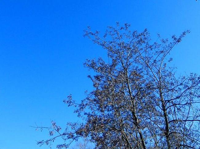 12.01.16 In questi giorni il cielo sta regalando colori stupendi 😍 Blusky Clearksy Sky Blue Colours Wonderfulcolors Reggioemilia Ig_reggioemilia Volgoreggioemilia Vivoreggioemilia Ig_emiliaromagna Volgoemiliaromagna Buongiornore Gazzetta_re Tagsforlikes Loves_nature Naturelovers Nature
