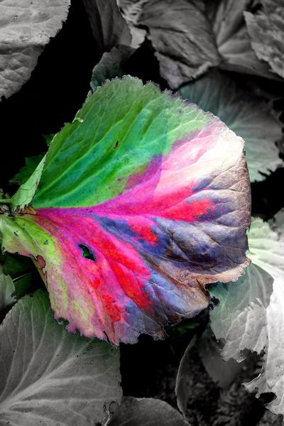 Coloured Leafs Leaf Leaf 🍂 Leaves Multi Colored Close-up No People Art And Craft Creativity Nature Rainbow Textured  Pattern Day Outdoors Water Flower