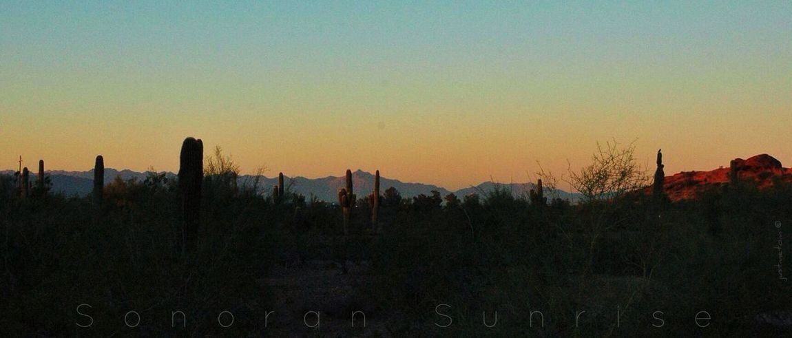 A Sonoran Desert sunrise captured in Phoenix earlier this week ... good morning ... afternoon ... or evening to all ... I wish all peace and joy on this eve of Christmas Day ✨ EyeEm Nature Lover Sunrise America's West Series
