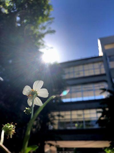 Plant Flowering Plant Flower Growth Sunbeam Sky Sunlight