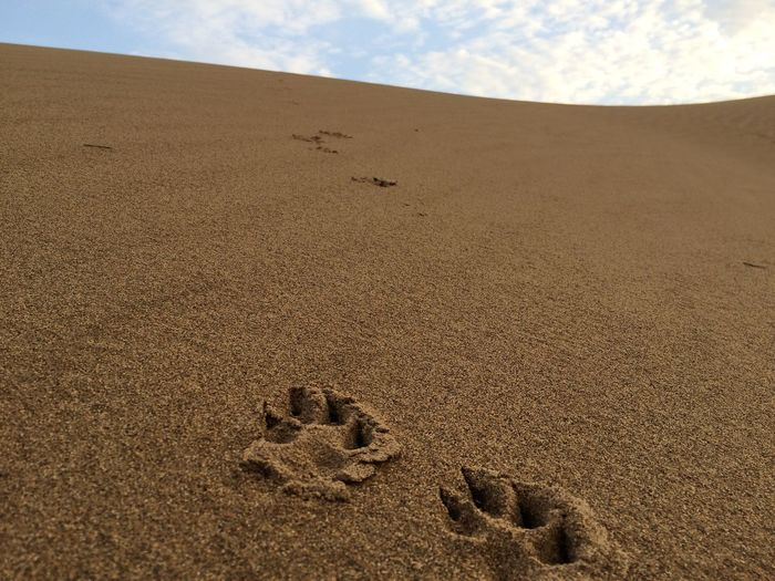 I was following the fox 😁 Sandy Lands