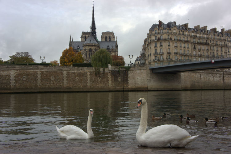 Architecture Lake Cloud - Sky Fountain Built Structure Bird Sky Water No People Outdoors Day Paris, France  Swans Couple In Love Adapted To The City Paris Canal Saint Martin