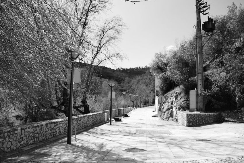 Beauty In Nature Alley Alleyway Tree Stone Pavement Black And White Vegetable Preto E Branco Noir Et Blanc Natureza