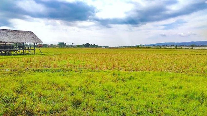 Hijau... Green... Instagram Instagood Instafollow Instalike Instapic Instamood Landscape Aceh Acehbesar Niceday Pictures Pictureoftheday Picoftheday 👌👏