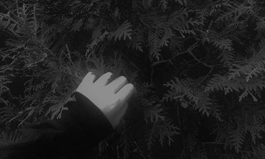 Human Body Part Tree Nature Nature Close-up Human Hand Leaf