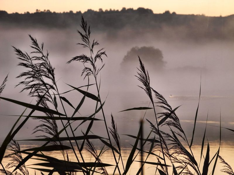 Schalkenmehren Beauty In Nature Fog Foggy Morning Nature No People Outdoors Reeds Scenics Sunrise Tranquil Scene Tranquility Water